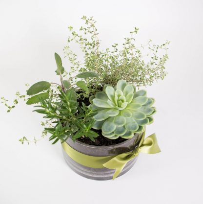 Plant Gift, Living Bouquet of Winter Herbs & Succulent