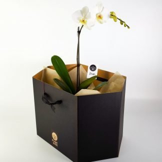 Plant Gift Box for large or broad plants