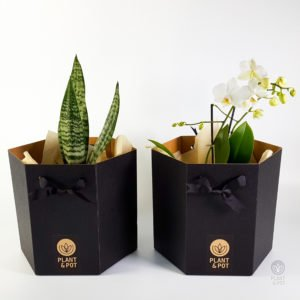 Plant Gift Box for small to medium sized plants