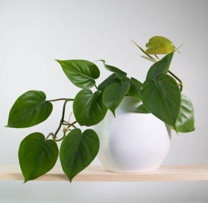 Indoor plants, house plants, pot plants