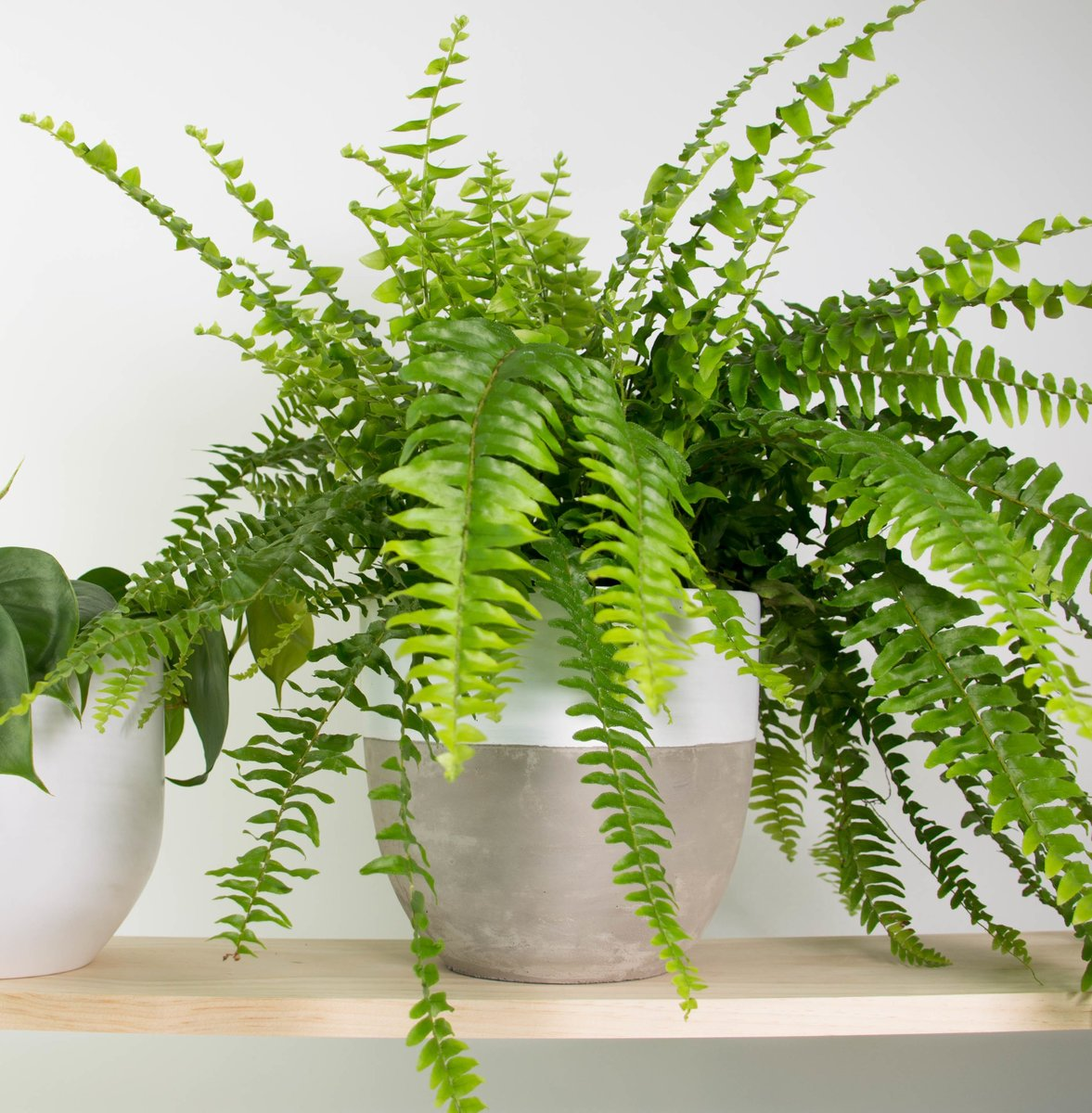 5 Indoor Plants for Low Light - On the Danforth