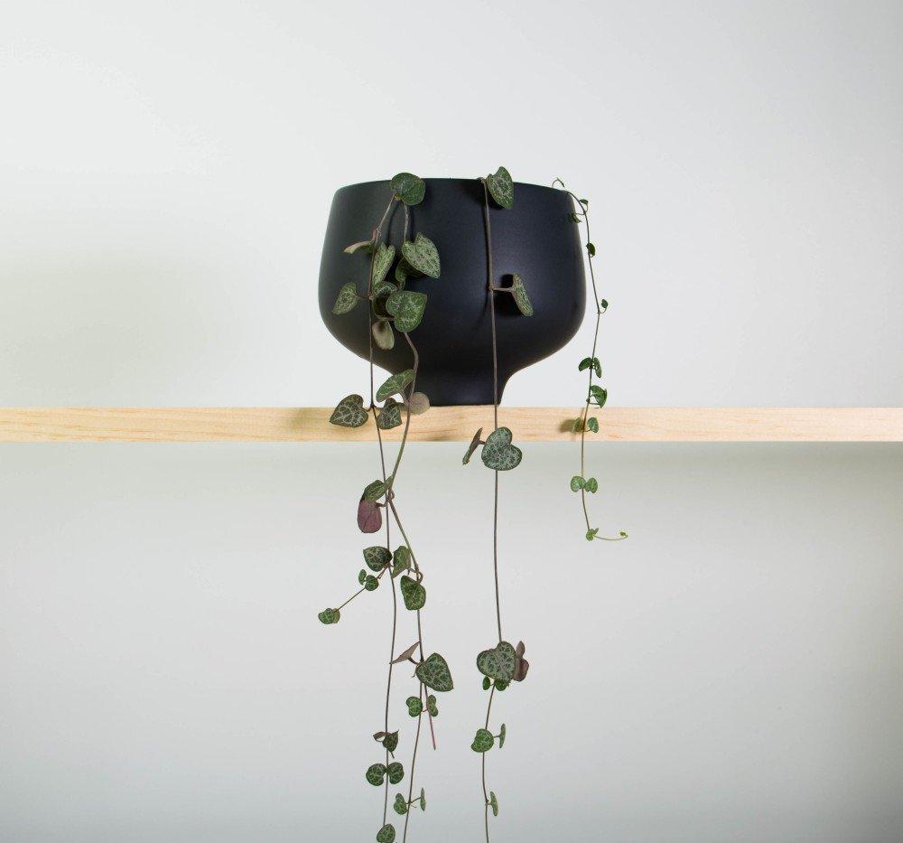 Chain of Hearts in Matt Black Pedestal Pot
