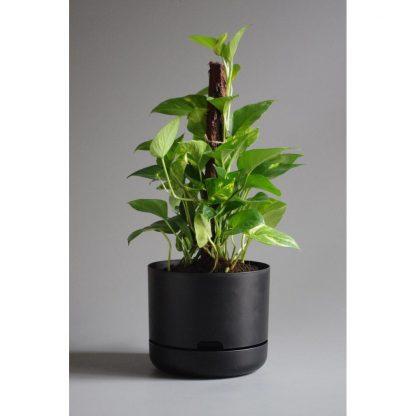 Mr Kitly 25cm Self Watering Plant Pot in Black