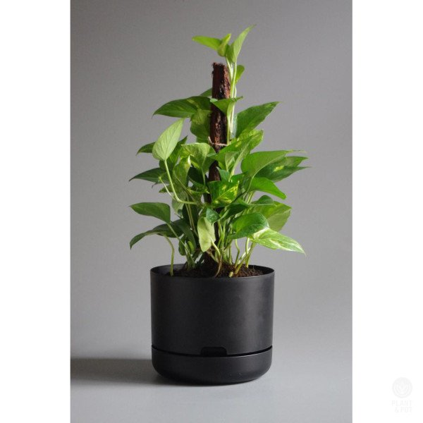 Mr Kitly Self Watering Plant Pot 25cm Black Plantandpot Nz