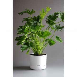 Mr Kitly 25cm Self Watering Plant Pot in White