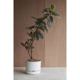 A very big indoor planter, Mr Kitly White Plant Pot 37.5cm diameter