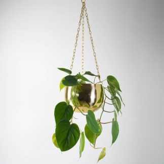 Sweetheart Plant in our Small Real Brass Hanging Planter