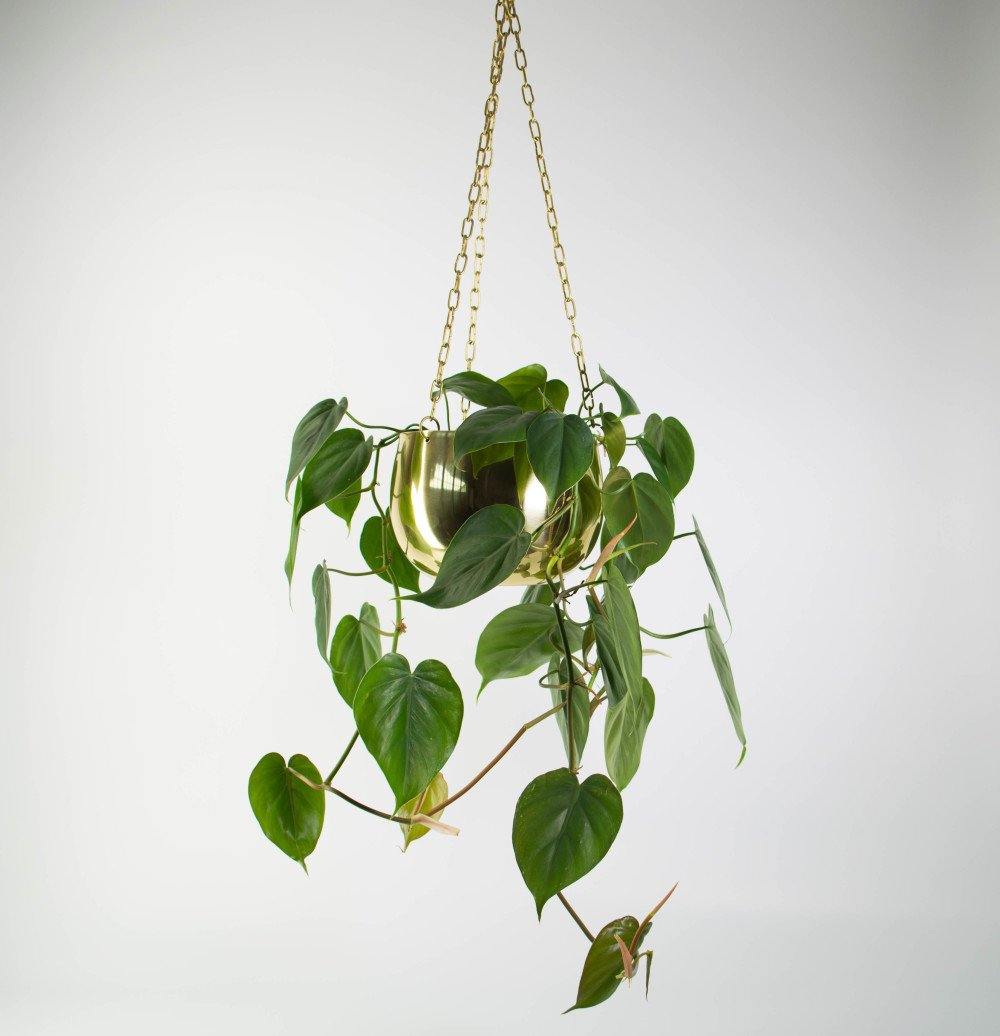 Hanging Plants Indoors Nz Chic Wall Hanging Baskets Nz