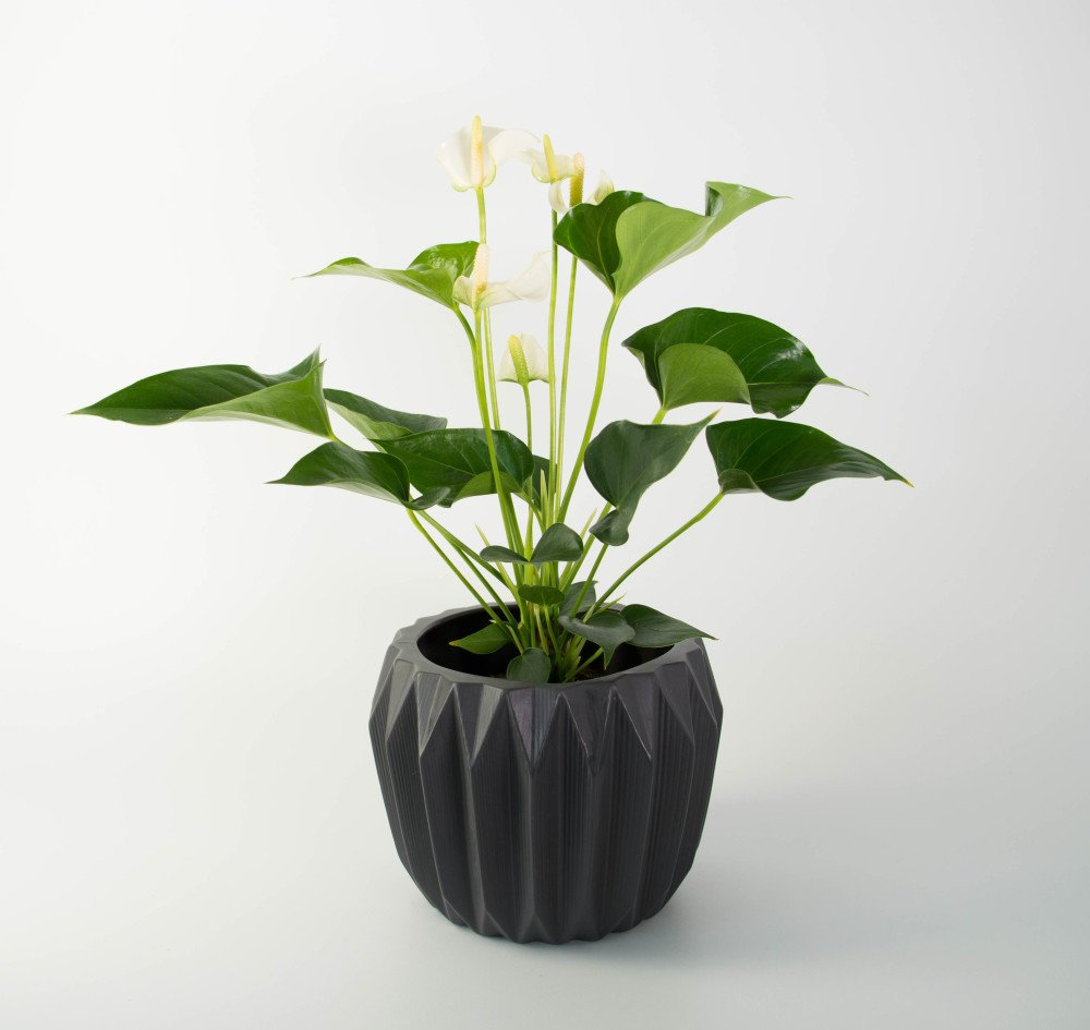 Fluted Pot By Bloomingville With White Anthurium Plantandpot