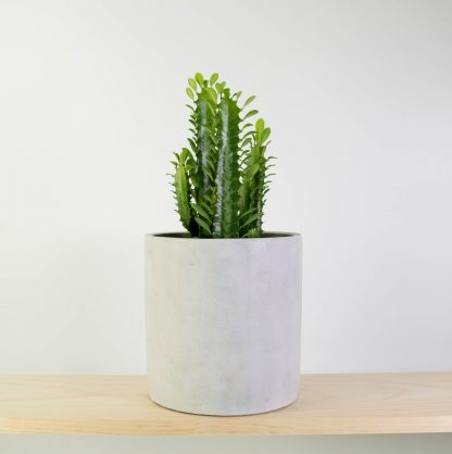 Cathedral Cactus in Concrete (Grey Washed)