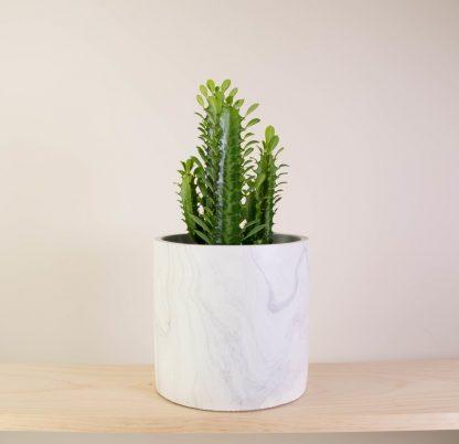 Cathedral Cactus in Marbled Concrete, Euphorbia Trigona Green