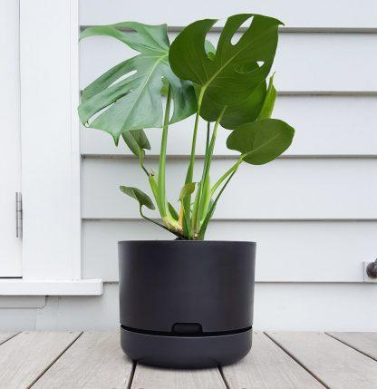 Monstera in Mr Kitly Self Watering Pot 25cm Black