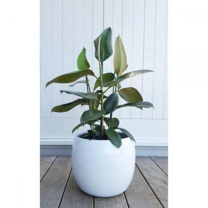 The elegant pure white Marino Pot with a high gloss finish.