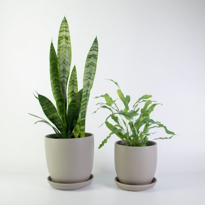 Set of 2 Grey Pots with Matching Saucers