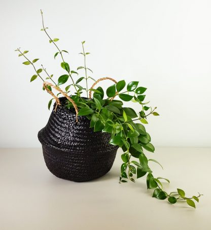 Belly Basket with Lipstick Plant