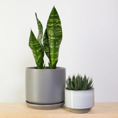Snake in Grey (alongside Aloe in Grey Glazed Pot)