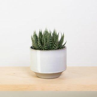 Aloe Aristata in Grey Glazed Pot by Hubsch Small
