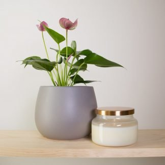 Anthurium Joli with Fox & Ivy Soy Candle, a lovely plant gift