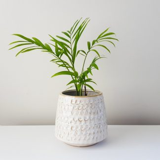 Petite Parlour Palm in Madam Stoltz Pattern Pot