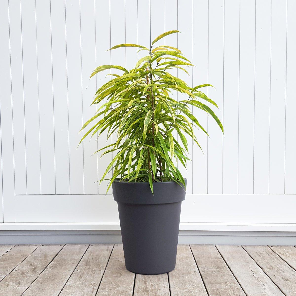 Tall Grey Plant Pot Lightweight Plastic Plantandpot Nz