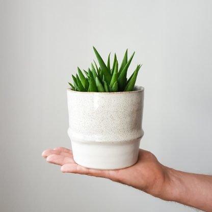 Aloe Black Gem in Akiko Plant Pot small