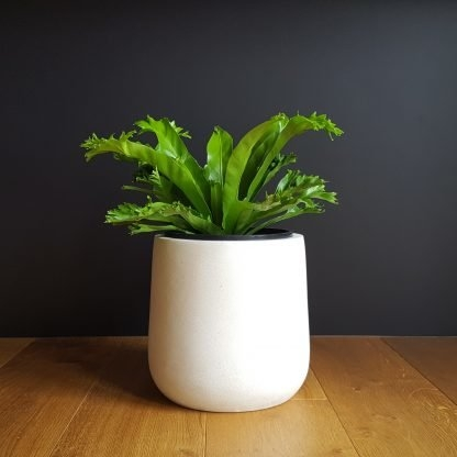 Crissie Fern in White Lightweight Pot