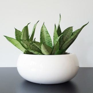 White Gloss Bowl for Indoor Plants